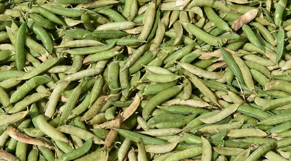 Flere plantebaserede fødevarer med danske råvarer