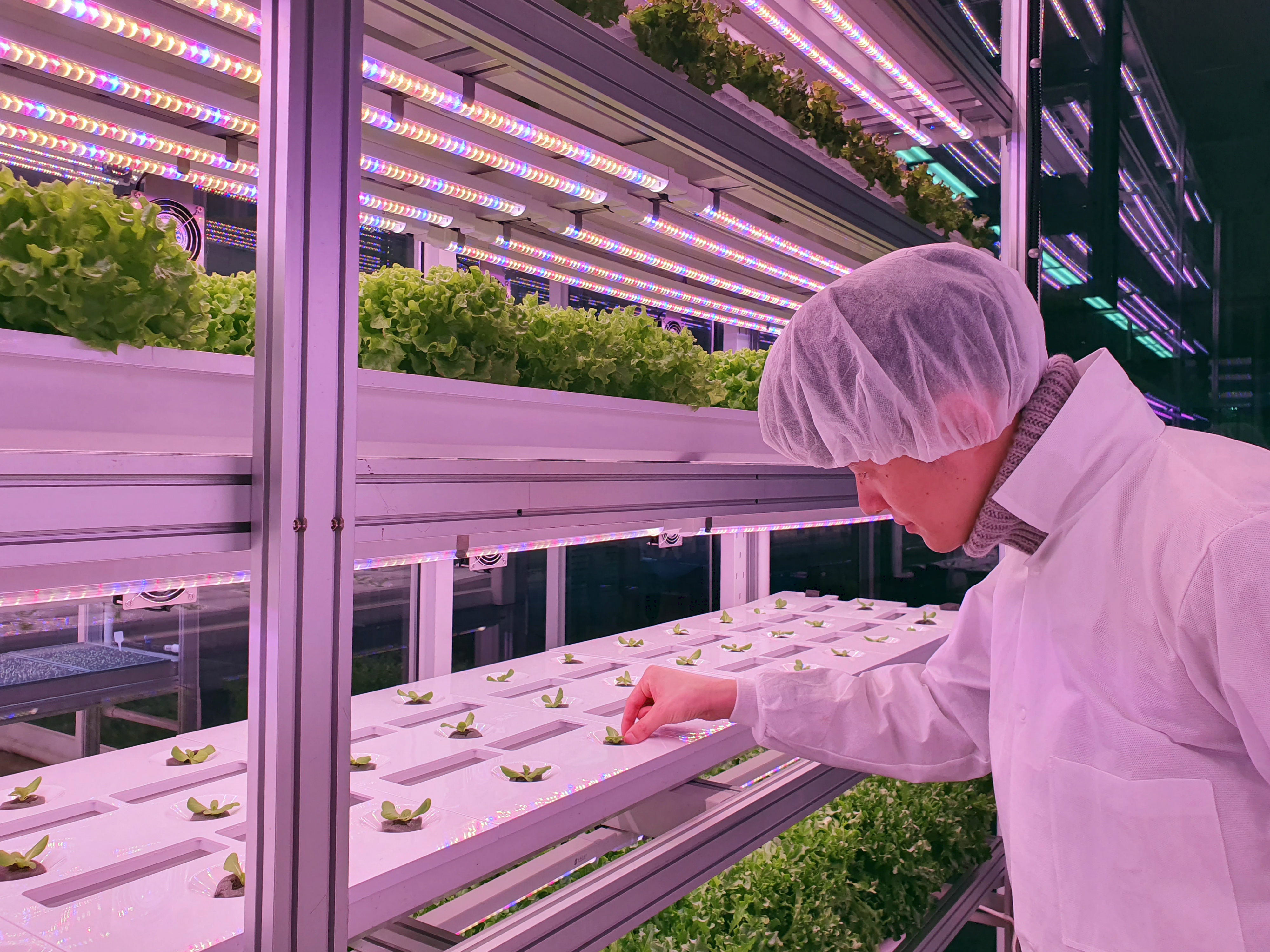 Challenges and opportunities in vertical farming: What is needed to fulfil the potential in Europe? Danish and French perspectives