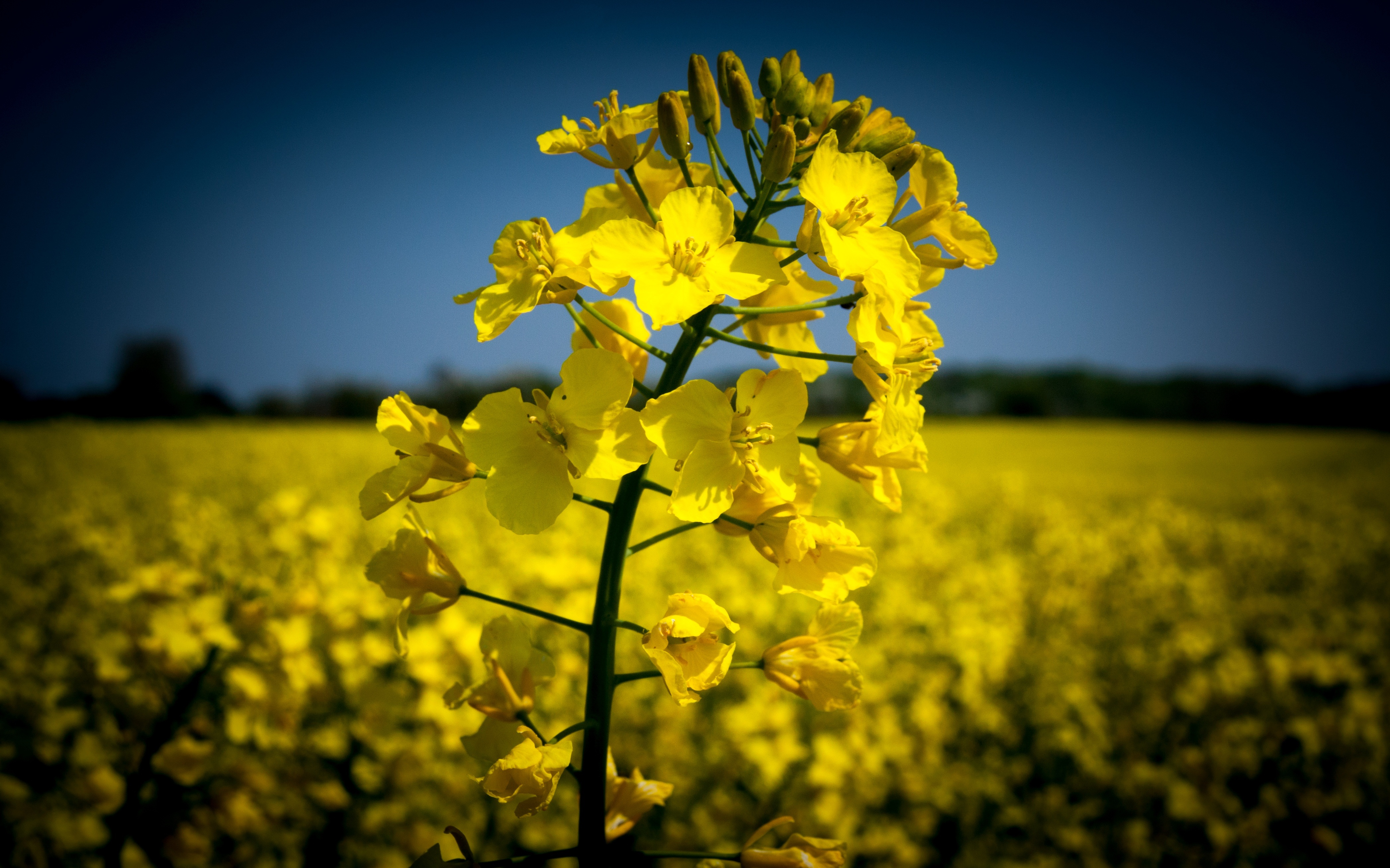 Replacing petrochemicals in adhesives – Our experience with rapeseed protein  [webinar]