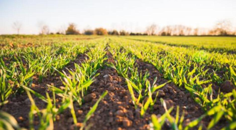 Klimateknologier til landbruget – Nitrifikationshæmmere og lattergasreduktion
