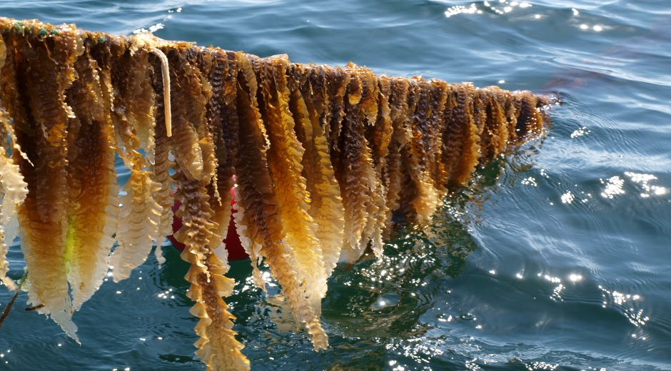 10th Nordic Seaweed Conference
